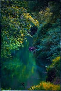Suislaw River meandering through  the  forest near Eugene, Oregon.