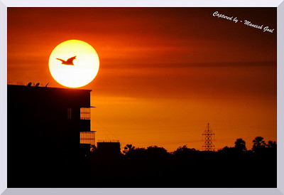 A Bat flies across the setting sun - captured from my window