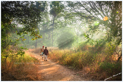 Morning rituals! Inside the Sanjay Gandhi National Park  See the B&W version here