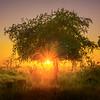 Sunburst Underneath The Tree Kaziranga National Park, Assam, North-Eastern India