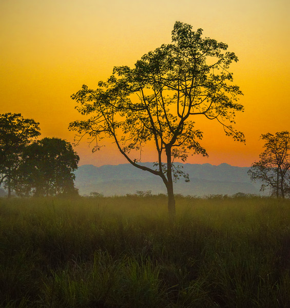 Fog Mist Rising In Twilight Hour Kaziranga National Park, Assam, North-Eastern India