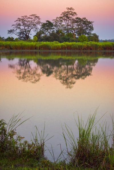 Mirror Reflections Alongside River Bank Kaziranga National Park, Assam, North-Eastern India