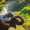 A Giant Splash Kaziranga National Park, Assam, North-Eastern India