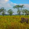 In Amongst The Trees Kaziranga National Park, Assam, North-Eastern India