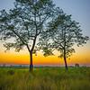 Silhouette Of Twin Trees During Twilight Kaziranga National Park, Assam, North-Eastern India