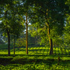 First Light In The Tea Fields Kaziranga National Park, Assam, North-Eastern India