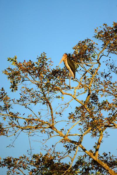 _DJ34069 Kaziranga National Park, Assam, North-Eastern India