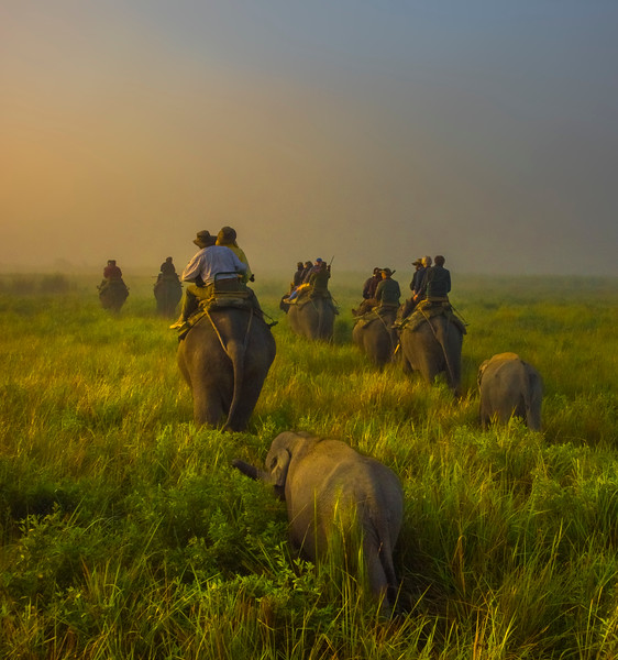 In A Informal Lineup Through Meadow Kaziranga National Park, Assam, North-Eastern India