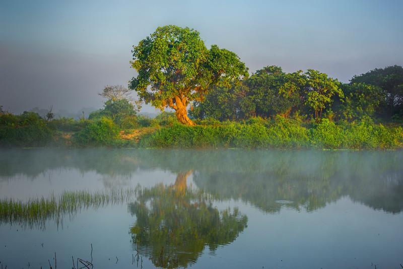 First Light Makes It Way Down River Kaziranga National Park, Assam, North-Eastern India