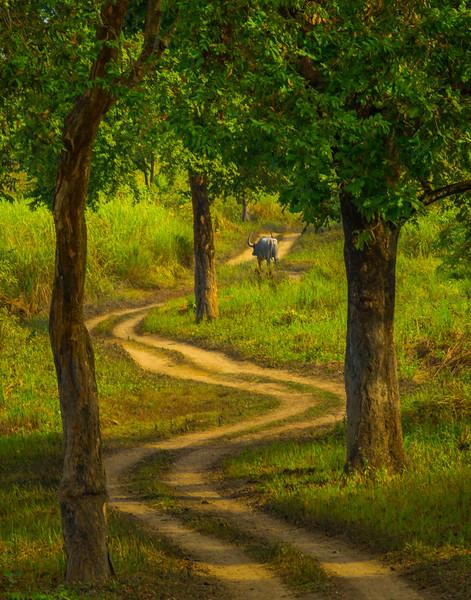 Leading The Way Kaziranga National Park, Assam, North-Eastern India