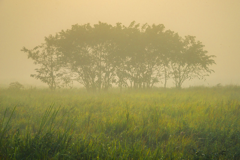 Out On The Plains Early Morning Kaziranga National Park, Assam, North-Eastern India
