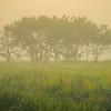 Out On The Plains Early Morning Kaziranga National Park, Assam, North-Eastern India