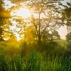 Sunset Descending On The Park Kaziranga National Park, Assam, North-Eastern India