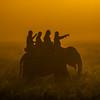 Early Morning Cruise In Mist Kaziranga National Park, Assam, North-Eastern India