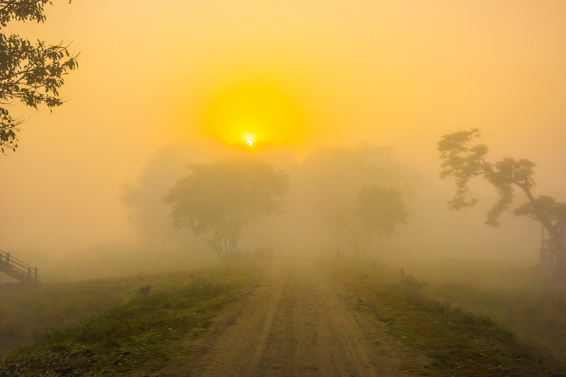 The Road Into The Morning Light Kaziranga National Park, Assam, North-Eastern India