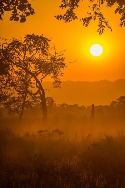 A Misty Sunset Through The Branches Kaziranga National Park, Assam, North-Eastern India