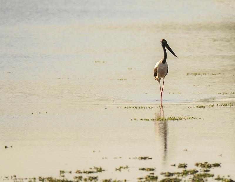 _DJ34031 Kaziranga National Park, Assam, North-Eastern India