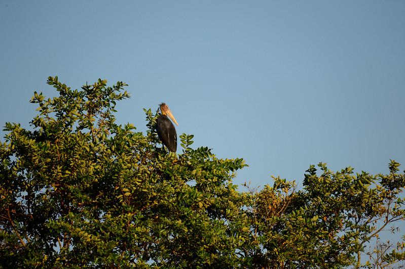 _DJ34076 Kaziranga National Park, Assam, North-Eastern India