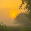 As The Sun Rises In The Park Kaziranga National Park, Assam, North-Eastern India