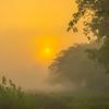 As The Sun Rises In The Park Kaziranga National Park, Assam, North-Eastern India