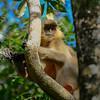 _DJ34152 Kaziranga National Park, Assam, North-Eastern India