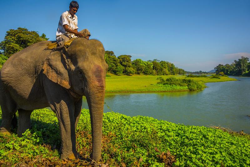 Going To Work Kaziranga National Park, Assam, North-Eastern India