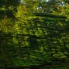 Criss Cross Patterns In The Tea Fields Kaziranga National Park, Assam, North-Eastern India