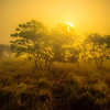 Sun Peaking Out Of Trees In Meadow Kaziranga National Park, Assam, North-Eastern India