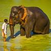 A Little One On One Time Kaziranga National Park, Assam, North-Eastern India
