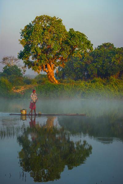 Fisherman In Perfect Sync Passing Tree Kaziranga National Park, Assam, North-Eastern India
