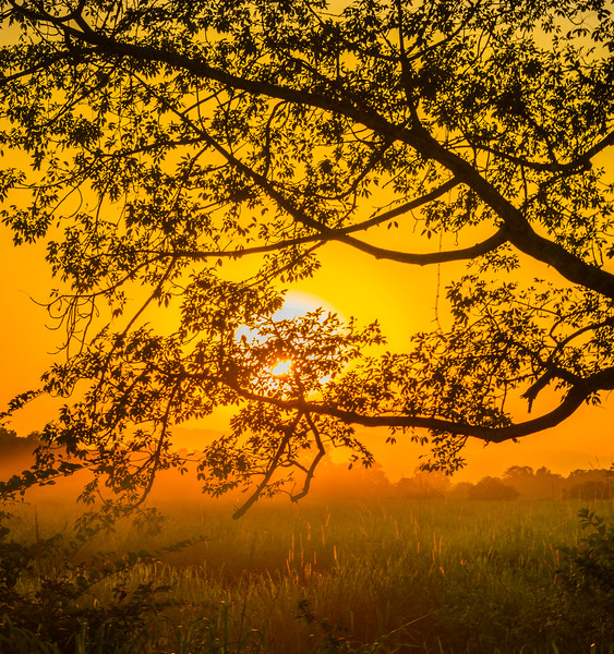 Sunset Mist As Day Comes To End Kaziranga National Park, Assam, North-Eastern India