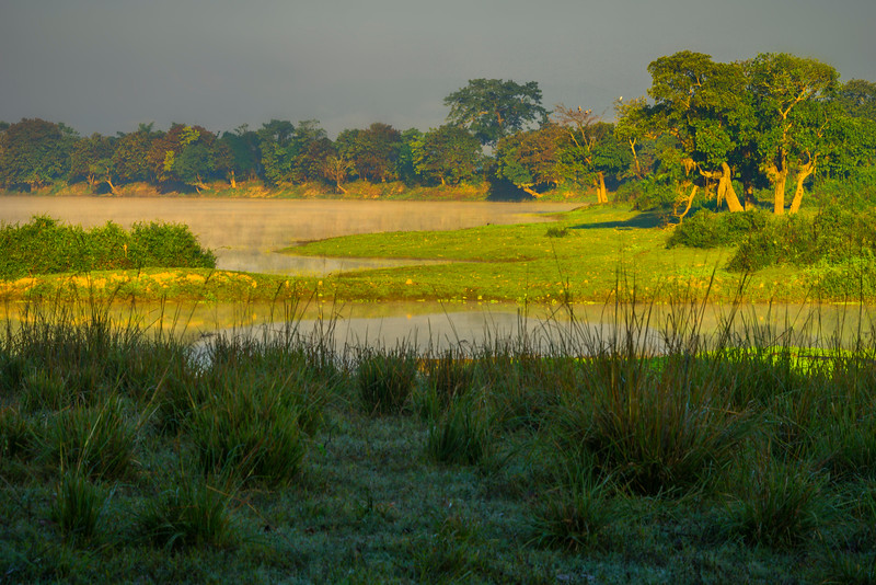 Morning Light Shines On The Surrounding Trees Kaziranga National Park, Assam, North-Eastern India