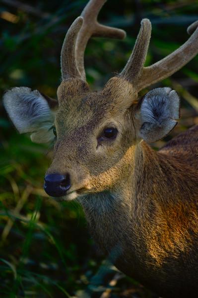 Owner Kaziranga National Park, Assam, North-Eastern India