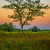 A Solo Tree Showcased At Twilight Kaziranga National Park, Assam, North-Eastern India