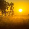 Sun Brings Mystery To The Park Near Sunset Kaziranga National Park, Assam, North-Eastern India