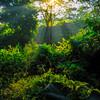 Sun Glows Through The Forest Kaziranga National Park, Assam, North-Eastern India