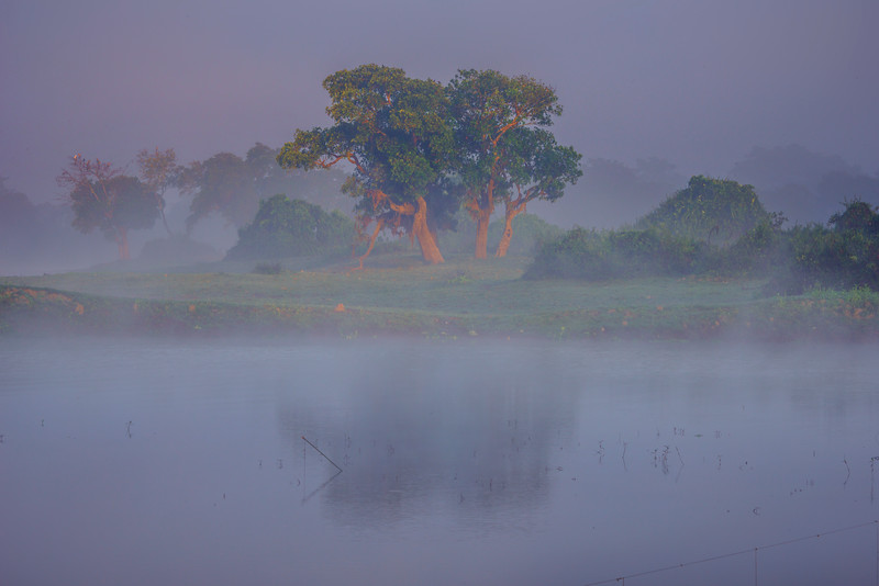 First Light Shines On Single Tree Kaziranga National Park, Assam, North-Eastern India