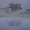 First Light Shines On Single Tree Kaziranga National Park, Assam, North-Eastern India