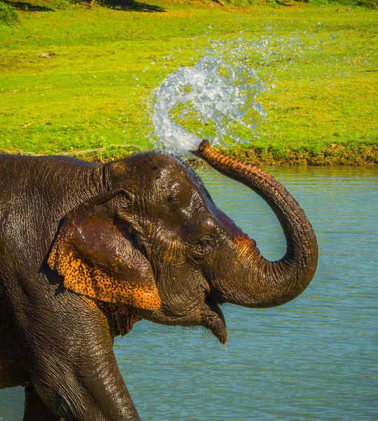A Flip Of The Tongue Kaziranga National Park, Assam, North-Eastern India