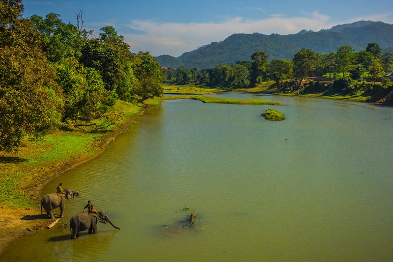 Lunch Hour Along The River Kaziranga National Park, Assam, North-Eastern India