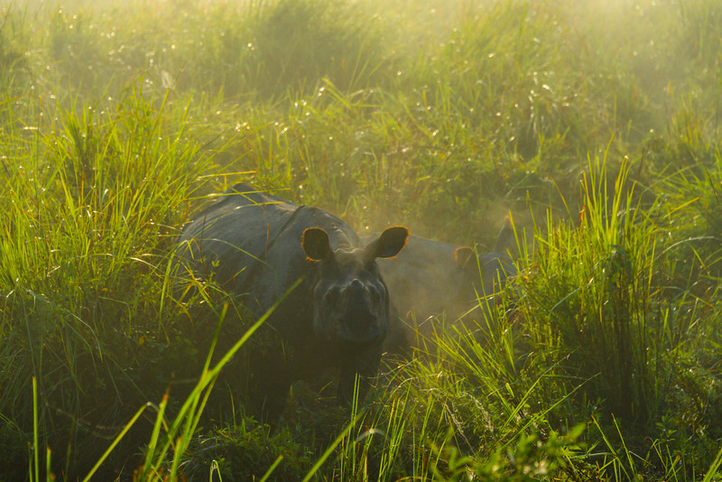 One-Horned Rhino First Find Kaziranga National Park, Assam, North-Eastern India