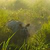 One-Horned Rhino First Find Kaziranga National Park, Assam, North-Eastern India