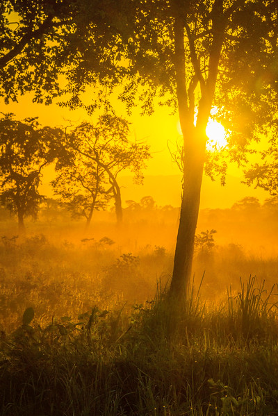 Sun Begins To Set On The Parks Meadow Kaziranga National Park, Assam, North-Eastern India