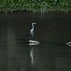 _DJ34305 Kaziranga National Park, Assam, North-Eastern India
