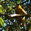 _DJ34184 Kaziranga National Park, Assam, North-Eastern India
