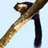 _DJ34114 Kaziranga National Park, Assam, North-Eastern India