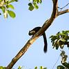 _DJ34110 Kaziranga National Park, Assam, North-Eastern India