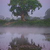 Early Morning Tree Reflections Along Bank Of River Kaziranga National Park, Assam, North-Eastern India