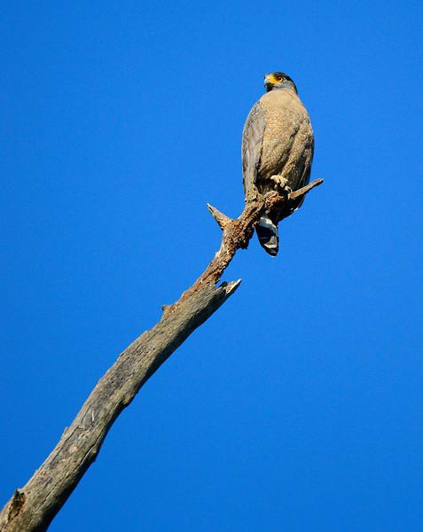 _DJ34257 Kaziranga National Park, Assam, North-Eastern India