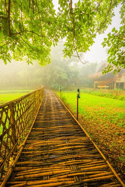 A Path Into The Warm Light Kaziranga National Park, Assam, North-Eastern India